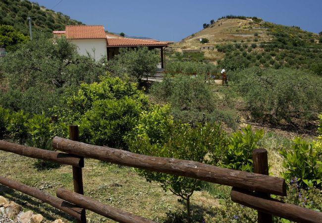 Ferienwohnung La Collina degli Ulivi - Casa Ulivi 1 (2127480), Patti, Messina, Sizilien, Italien, Bild 9