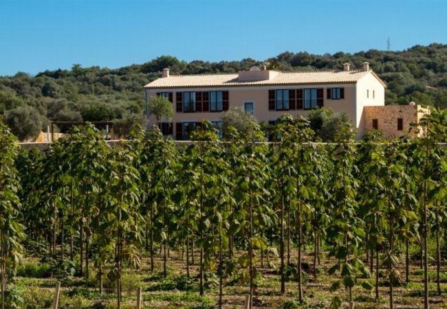 Ferienhaus Villa in Manacor, Palma de Mallorca 102676 (1937888), Manacor, Mallorca, Balearische Inseln, Spanien, Bild 1