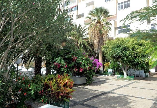 Appartement de vacances Apartment Marechu (2176968), Benijo, Ténérife, Iles Canaries, Espagne, image 23