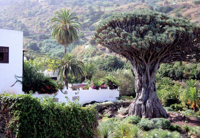 Maison de vacances Finca Casa Yaya (2176973), Icod de los Vinos, Ténérife, Iles Canaries, Espagne, image 28