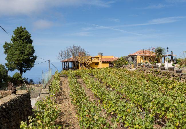 Maison de vacances Finca Casa Yaya (2176973), Icod de los Vinos, Ténérife, Iles Canaries, Espagne, image 23