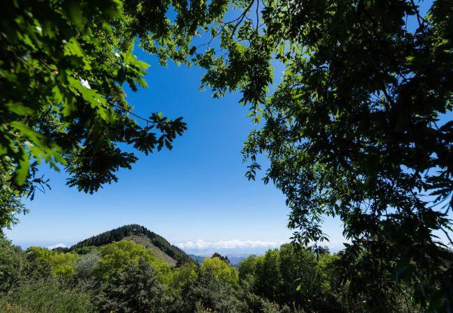 Ferienhaus GC49 RURAL HOUSE IN NATURAL PARK (2195237), Moya, Gran Canaria, Kanarische Inseln, Spanien, Bild 37