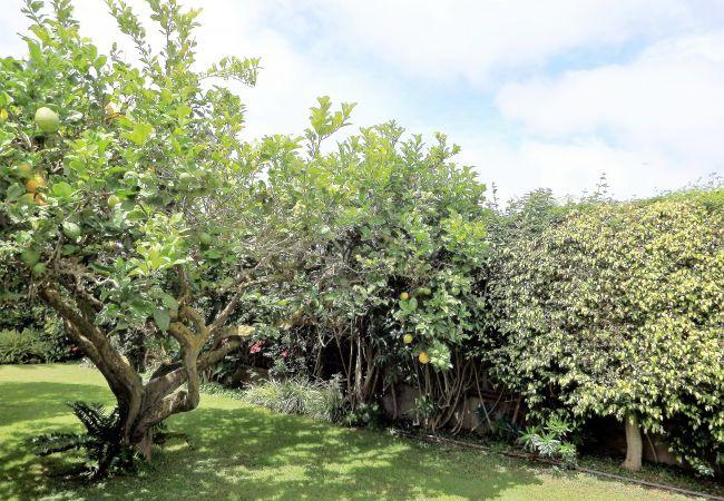 Maison de vacances Bungalow Yeray (2217537), Tacoronte, Ténérife, Iles Canaries, Espagne, image 26