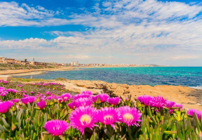 Ferienwohnung ID104 (2351051), Torrevieja, Costa Blanca, Valencia, Spanien, Bild 18
