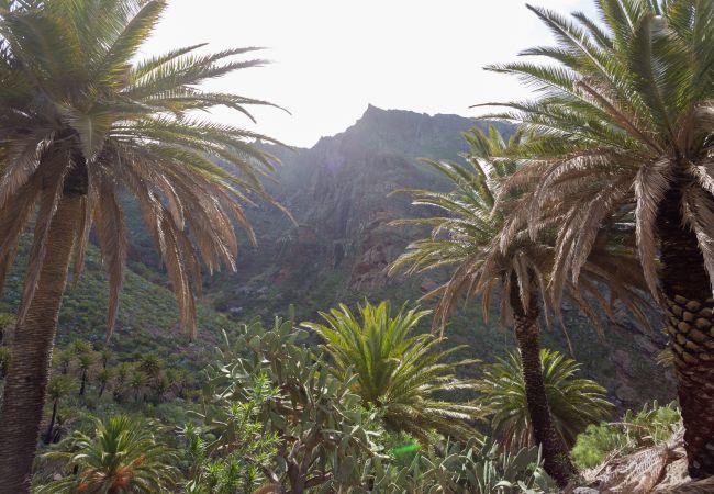 Maison de vacances Masca with garden and free WIFI (2408899), El Palmar, Ténérife, Iles Canaries, Espagne, image 26