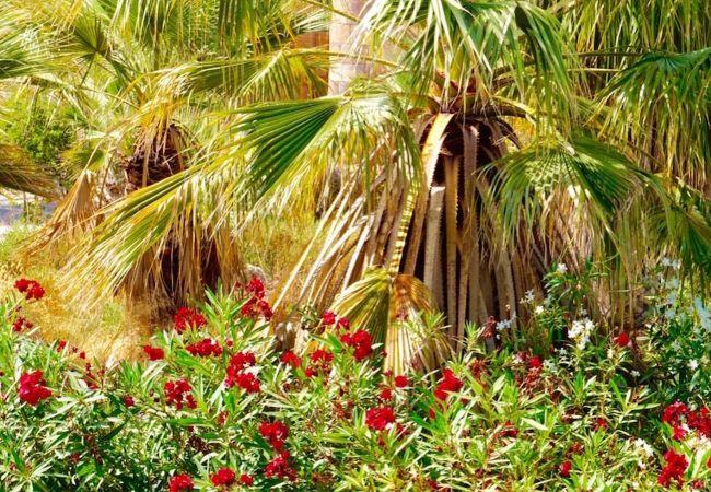 Maison de vacances Villa Mosa - A Murcia Holiday Rentals Property (2552029), Baños y Mendigo, , Murcie, Espagne, image 22
