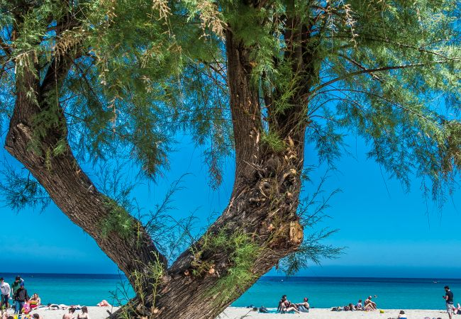 Appartement de vacances Casa con terrazza sul mare all'Addaura (2618846), Palermo, Palermo, Sicile, Italie, image 27